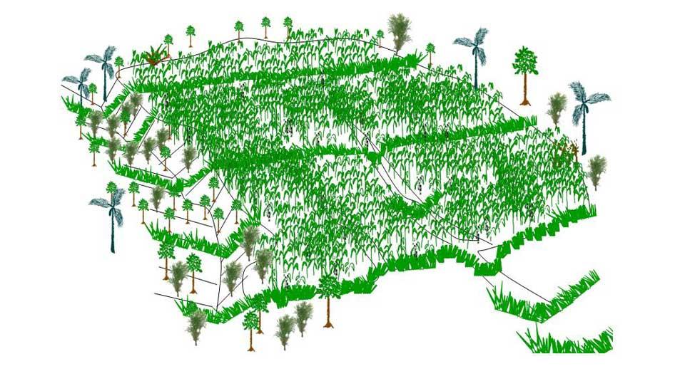 Barreras de Vetiver como parte del diseño de permacultura para conservar los suelos
