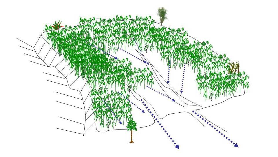 Desgaste del terreno por falta de método de conservación de suelo