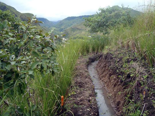 La intención NO es de mandar el agua al otro extremo del canal o zanja, sino permitir que el agua filtra paulatinamente en el subsuelo. Vetiver protege la zanja, sus raíces anclan el borde debajo y encima de la zanja.